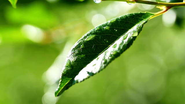 Close up of a water drops on leaves video