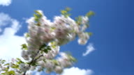 Close up of a white blossom video