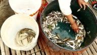 Woman sorts fish into a bucket video