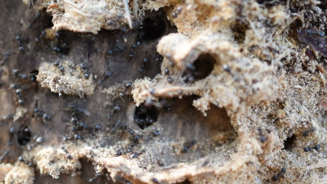 Close up of ants on wood video