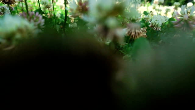 close up of camera moves through a field of flowers video