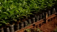 Close up of coffee plantation video