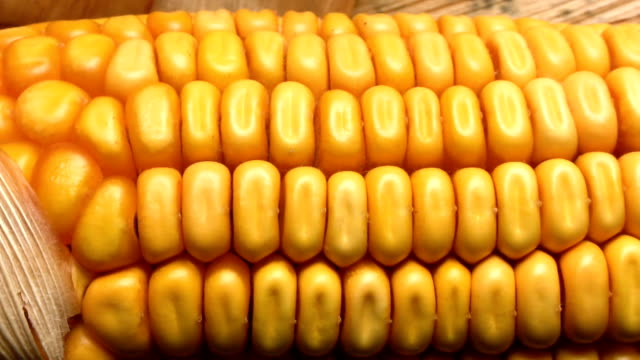 HD DOLLY: Close Up Of Corn On The Cob video