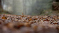 Close Up Of Leaves On Path Through Autumn Woodland video
