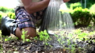 Close Up Of Man Planting Seedlings In Ground On Allotment video
