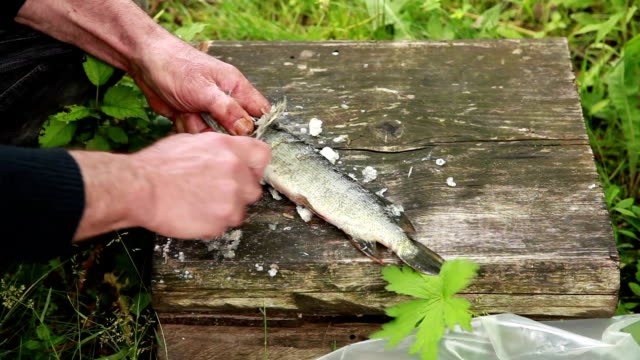 Close up of mans hands cleaning fish video