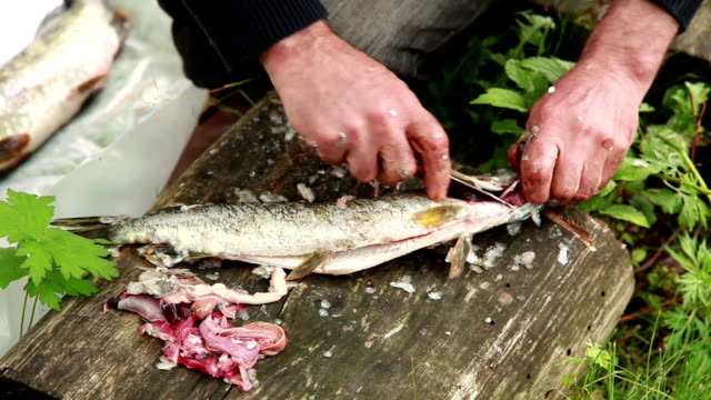 Close up of mans hands cutting out fish gills video