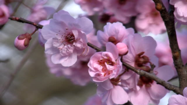 Close up of pink flowers video