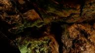 close up on rock wall in a  big cave- Cuevas de los Verdes, Lanzarote video
