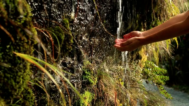 Close up on woman's hands cupped catching water from waterfall video