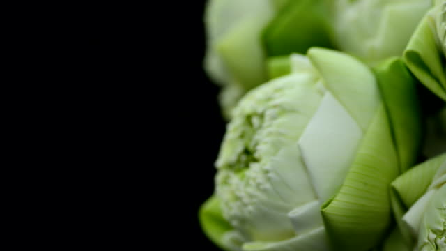 close up panning : arrange a lotus in a glass vase for respecting Buddha religion video