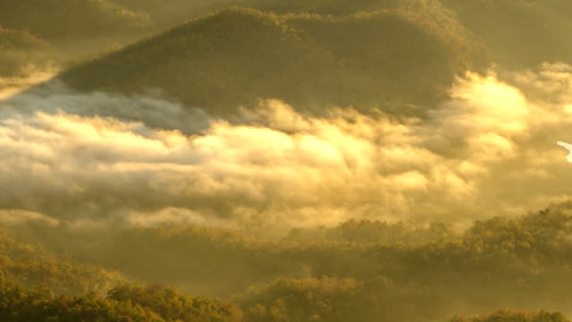 close up TL : mist sea in mountain of Thailand in the morning video