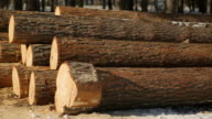 Close up view of sawn timber lying on ground in winter video