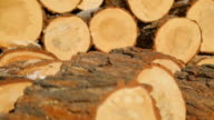 Close up view of sawn timber on sawmill video