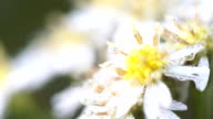 Close up white flowers with the soft background video