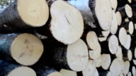 Closer and full view of the neatly piled cut logs video