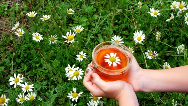 Close-up, against the background of chamomile and green grass, children's hands hold a glass cup with chamomile tea. Up in the cup there is a beautiful daisy video