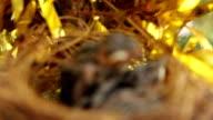 close-up bird's nest video