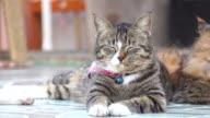 Close-up Cat Sleeping video