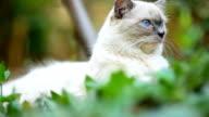 Close-up Cat video