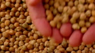 Closeup chickpea background, top view video