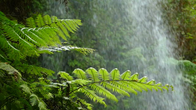 Close-up ferns with background water falling.Slow Motion video