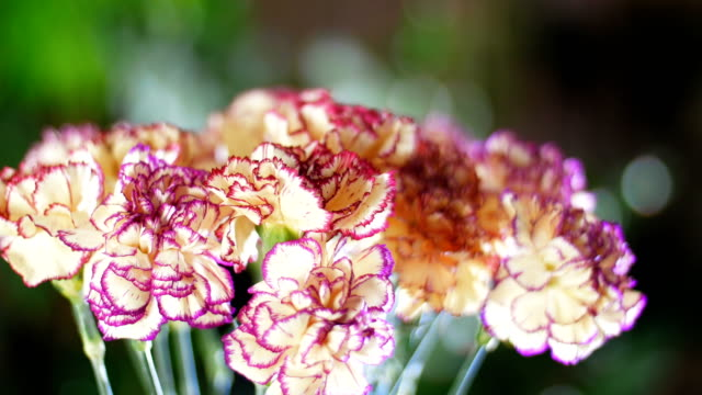 close-up, Flower bouquet in the rays of light, rotation, the floral composition consists of Carnation turkish Peach color video