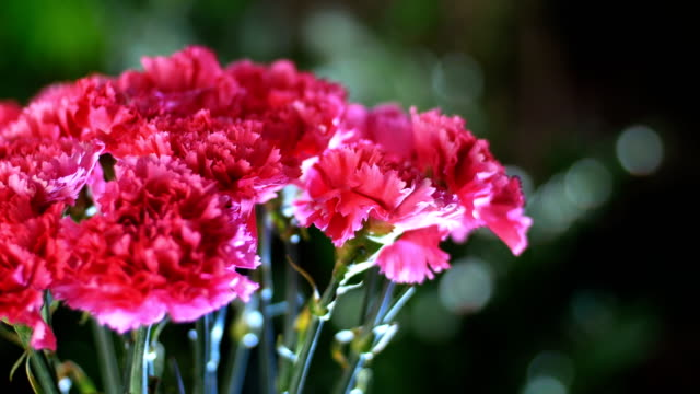 close-up, Flower bouquet in the rays of light, rotation, the floral composition consists of Bright pink turkish Carnation In the background a lot of greenery video