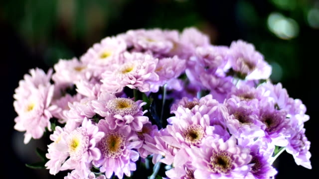 close-up, Flower bouquet in the rays of light, rotation, the floral composition consists of purple Chrysanthemum saba. In the background a lot of greenery video