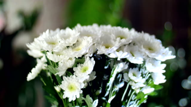 close-up, Flower bouquet in the rays of light, rotation, the floral composition consists of white Chrysanthemum Chamomile bacardi. In the background a lot of greenery video