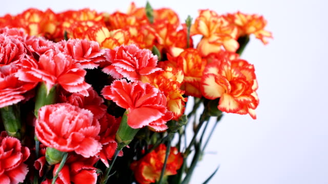 close-up, Flowers, bouquet, rotation on white background, consists of Bright yellow, orange and pink turkish Carnation video