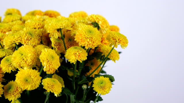 close-up, Flowers, bouquet, rotation on white background, floral composition consists of yellow Chrysanthemum santini video