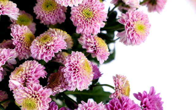 close-up, Flowers, bouquet, rotation on white background, floral composition consists of pink Santini video