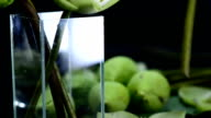 close-up follow: arrange folded lotus in a glass vase video