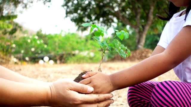 Close-up hand of asian female and little girl planting sapling in the land together. Ecology concept (part 1) video