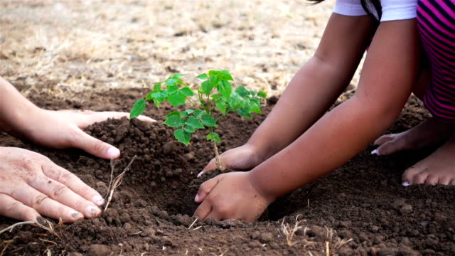 Close-up hand of asian female and little girl planting sapling in the land together. Ecology concept (part 2) video