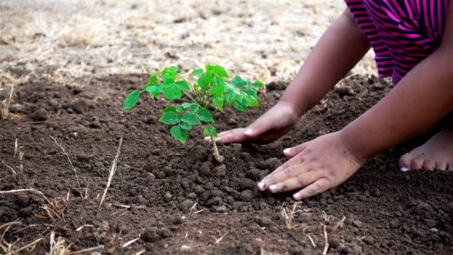 Close-up hand of asian female and little girl planting sapling in the land together. Ecology concept (part 3) video