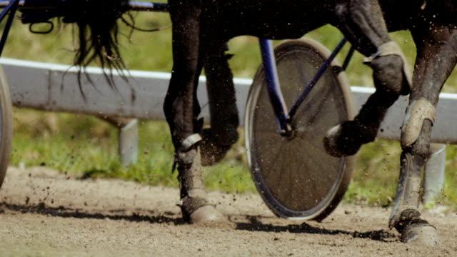 Closeup Harness racing (slow motion) video