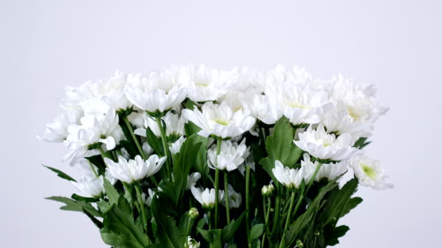 close-up, lowers, bouquet, rotation, floral composition consists of white Chrysanthemum Chamomile bacardi video