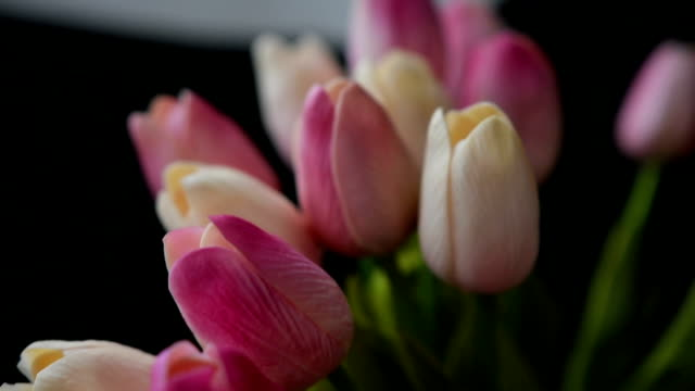 Close-up of a bouquet of tulips on a dark background video