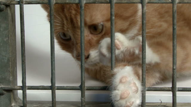 Close-up of a cat in cage looking at camera video