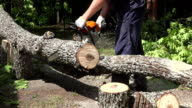 closeup of a man holding a chainsaw sawing firewood out of oak trees video