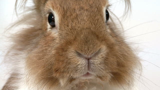 Close-up of a Rabbit video