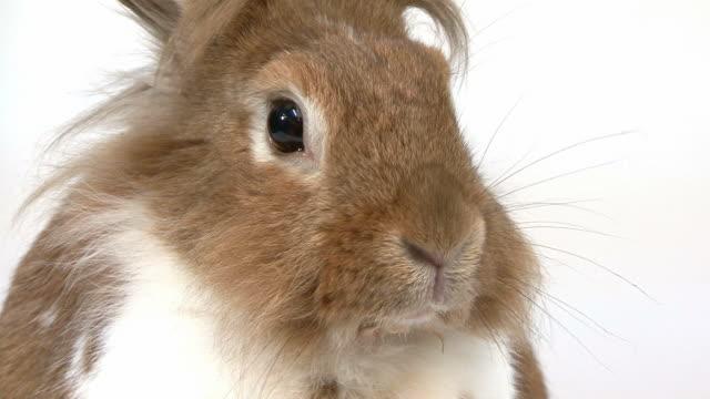 Close-up of a Rabbit video