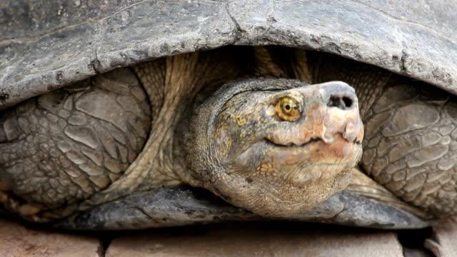 closeup of a turtle video