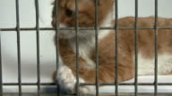 Close-up of a young cat in cage video