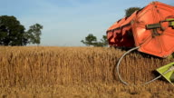 Closeup of agricultural combine machine with reel and cutter bar threshing corn. Panorama. 4K video