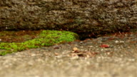 Closeup of an ant path video