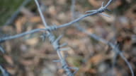 Close-up of barb wire fence separating person from freedom, property video