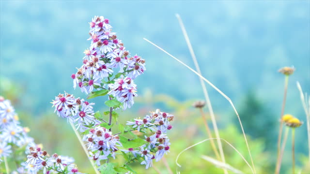 Close-up of Colorful North Carolina Flowers in the Appalachian Mountains video